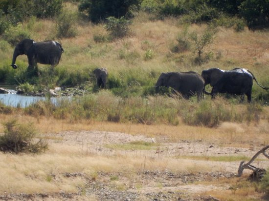 Malelane, Afrika Selatan: Wildlife view from 13th green across the Crocodile River.