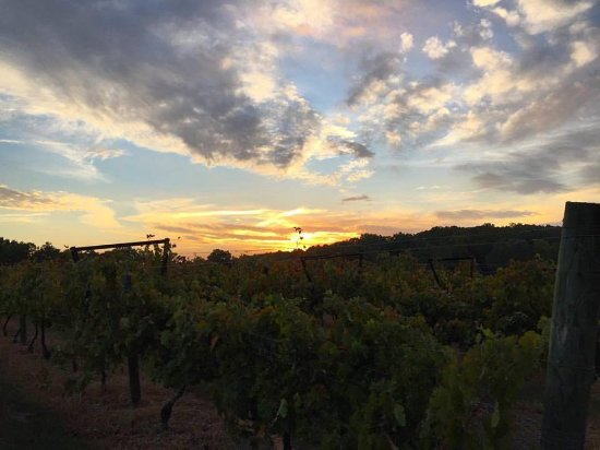 Ellijay, Τζόρτζια: Spectacular sunset over the vines!