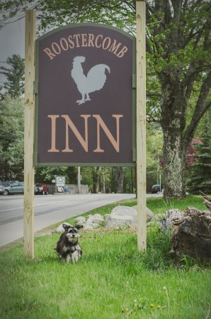 RoosterComb Inn : Just a candid of my dog running around the front, playing with a stick.