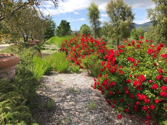 Healdsburg, Californien: gardens