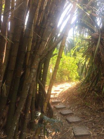 Cabuya, Kosta Rika: The way home.