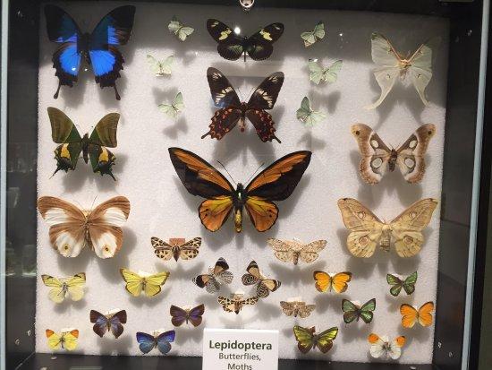 Harvard Museum of Natural History : photo1.jpg