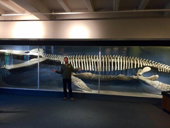 Harvard Museum of Natural History : photo2.jpg