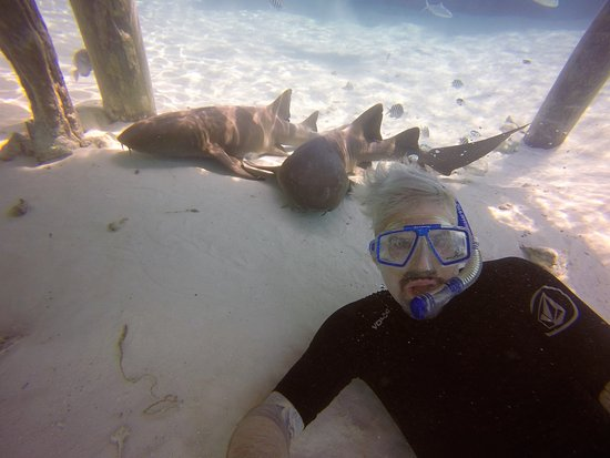 Out Islands: Shark selfie!