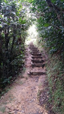 Bouillante, Guadeloupe: En_chemin_large.jpg