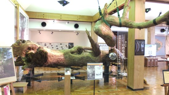 The Yakushima World Heritage Conservation Center