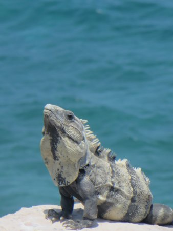 Ixchel Beach Hotel: Some of the locals hanging out