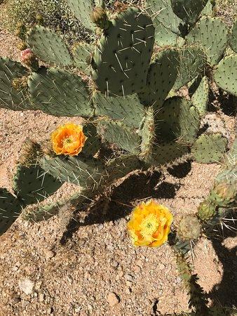 Mesa, AZ: photo1.jpg