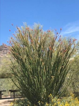 Mesa, AZ: photo2.jpg