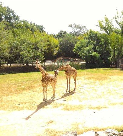 Cameron Park Zoo: Non stop fun!