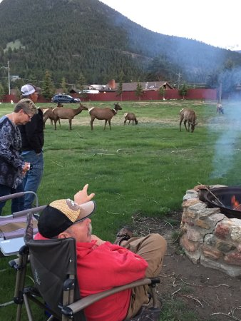 Elk Meadow Lodge & RV Resort: Fire pit and elk came to visit