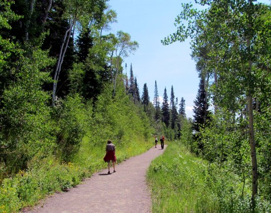 Steamboat Springs, CO: Trail at top of gondola.