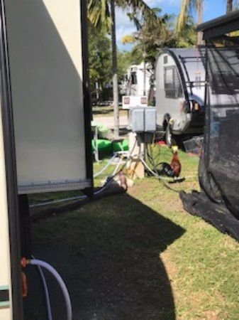 Boyd's Key West Campground: Electric and water hookups with a rooster hanging out beside them.