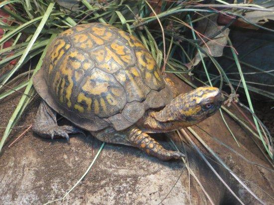 Bear Mountain, NY: Turtles too