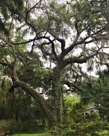 Bluffton, Carolina del Sur: photo0.jpg