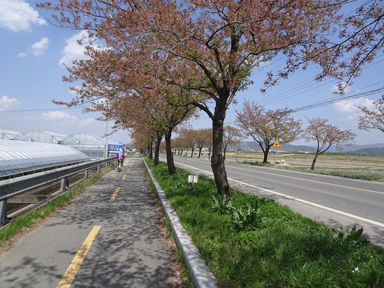 Camino hacia Gyeongju; ideal recorrerlo en bicicleta.