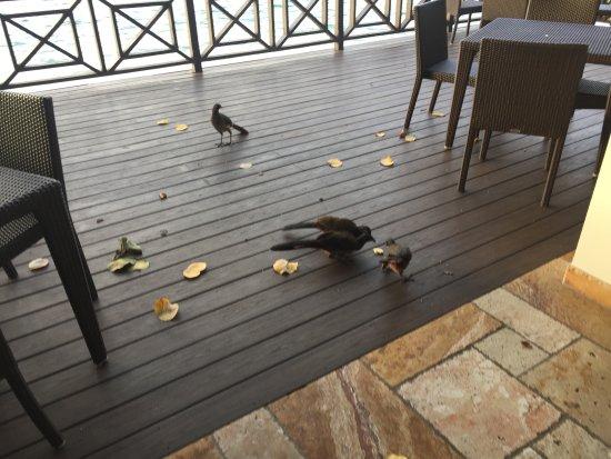 Speyside, Tobago: birds by bar