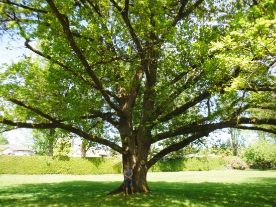 Filberg Heritage Lodge & Park: COLLEEN UNDER AMAZING 'GARRY OAK' TREE