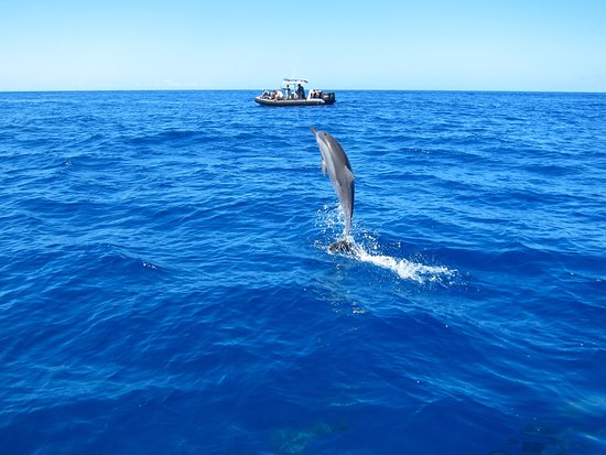 Eleele, HI: Spinner Dolphin on Captain Andy's raft tour