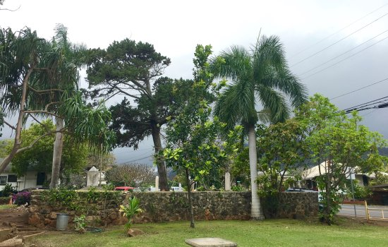 Wailuku, HI: Historic cemetery is now viewable from all angles thanks to a handy crew!