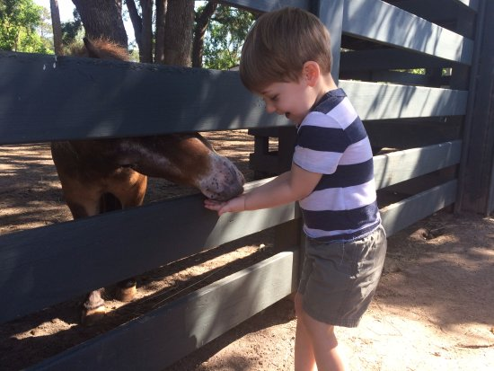 Lawton Stables: at the petting zoo