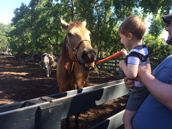 Lawton Stables: 3yo feeding the horses