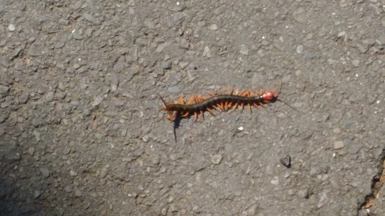 Hsinchu, Taiwan: 十八尖山夏季虫蛇要注意