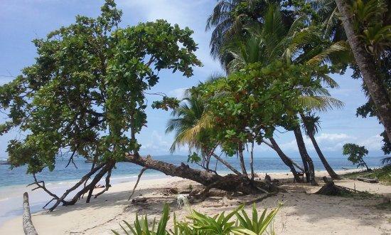 Under sea Panama: Paradis bis