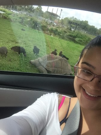 Loxahatchee, FL: Huge Tortoise !