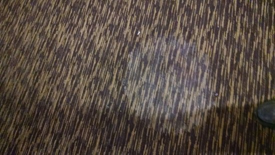 Midvale, UT: Dirty / stained carpet