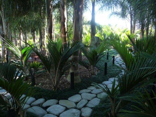 Matakana, New Zealand: Palm garden