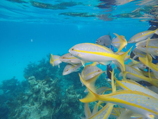 New Providence Island: endless colorful fish