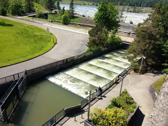 Img 20170522 151315 picture of bonneville lock for Bonneville dam fish counts 2017