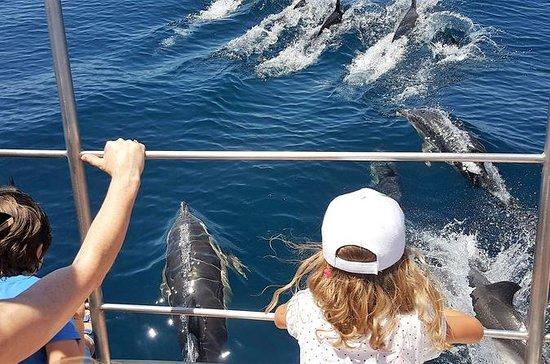 Avistamiento de delfines en catamarán...