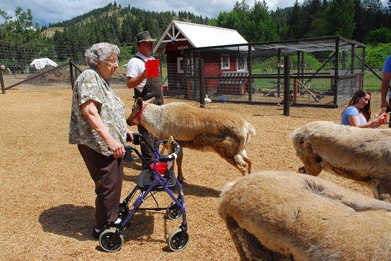 Leavenworth, WA: It's wonderful the farm was accessible for Grandma!!