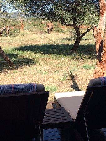 Bilde fra Madikwe Game Reserve