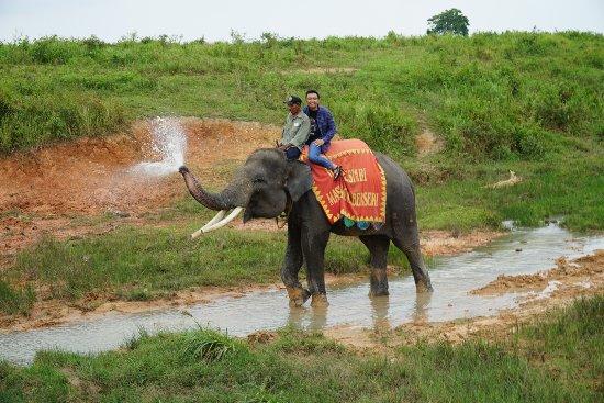 Lampung, Indonésia: Rawa dan Sungai habitat asli gajah