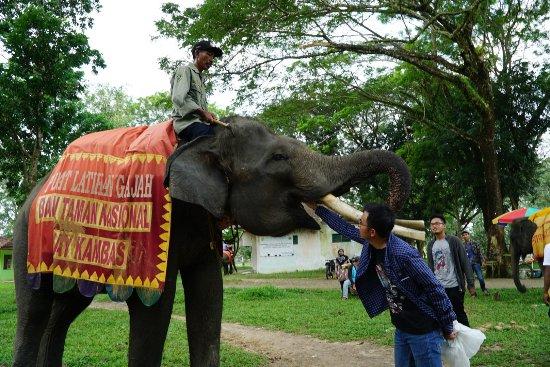 Lampung, Indonésia: Kasih makan gajah