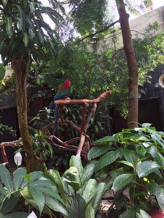 Bloedel Conservatory : photo3.jpg