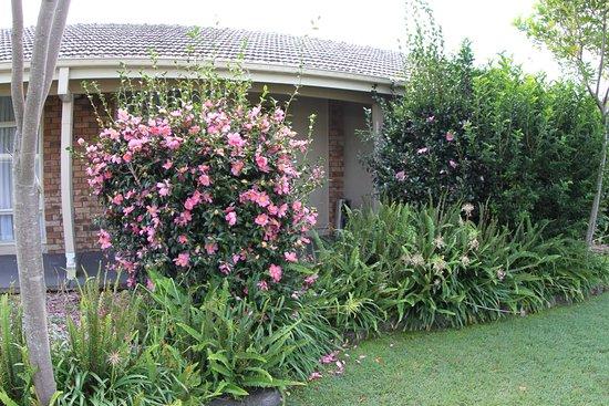 Raymond Terrace, Australie : relaxing gardens