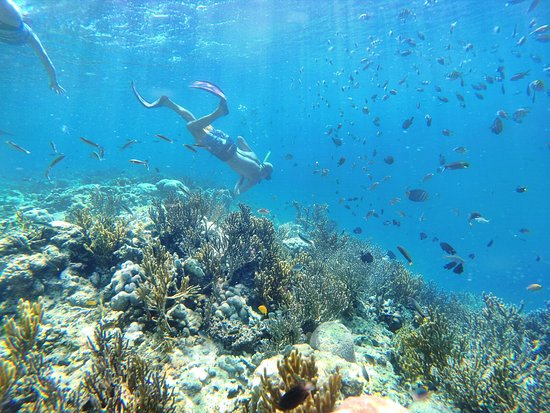 Banyuwedang, Indonesia: snorkeling with ton of fishes