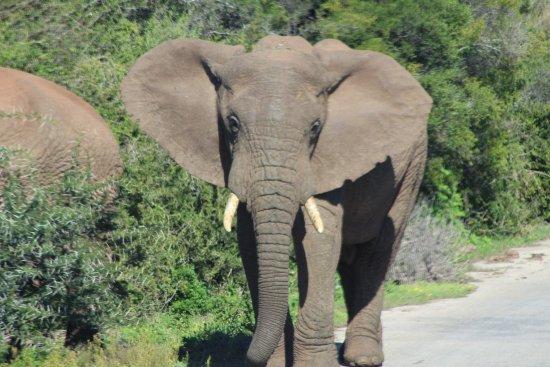 Addo Elephant National Park, Afrika Selatan: photo0.jpg