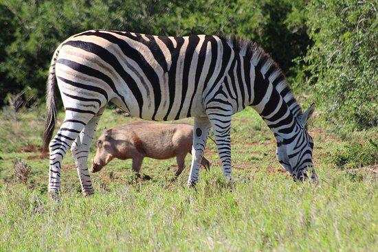 Addo Elephant National Park, Afrika Selatan: photo5.jpg