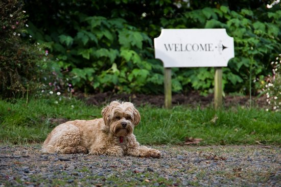 Ugbrooke Country Estate: Welcoming Committee