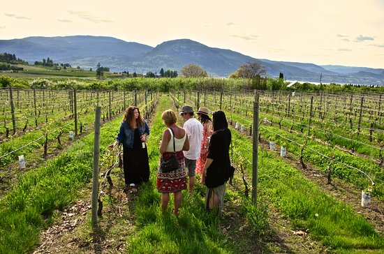 Penticton, Canada: Open Air Adventures and Wine Tours, vineyard wine tasting