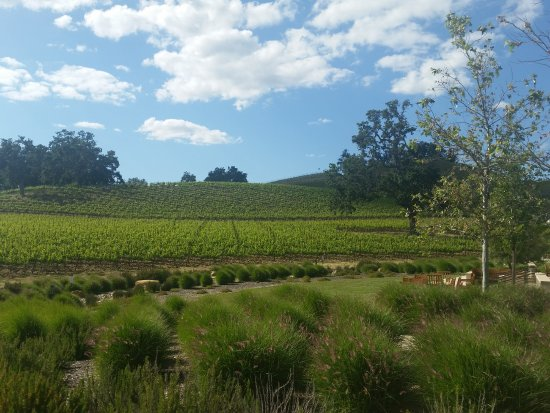 Paso Robles, Kalifornia: JUSTIN Vineyards and Winery