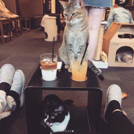 カフェ りこ 猫 きゃ