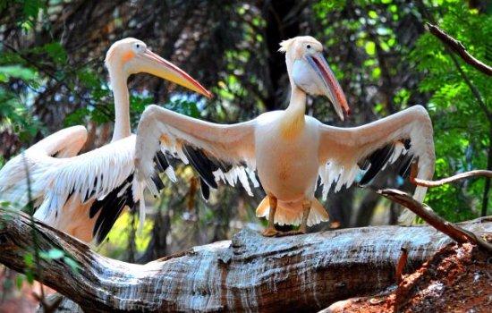 Visakhapatnam Zoo: Indira Gandhi Zoological Park