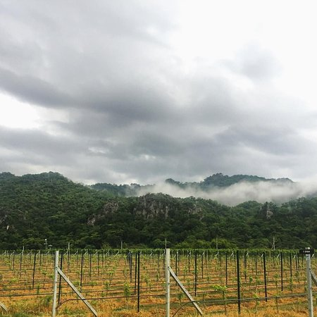 Pak Chong, Thailand: Pruning is finished and the rainy season arrives (photo credit: Nikki Lohitnavy)