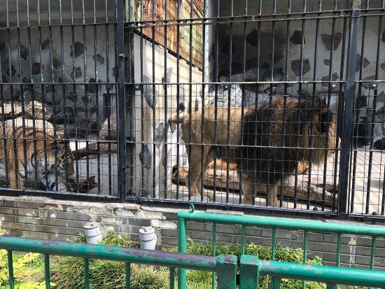 Tokuyama Zoo : photo3.jpg